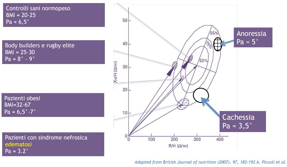 Bioimpedenziometria vettoriale - Dott. Marco Ballerini - Terni (Umbria)
